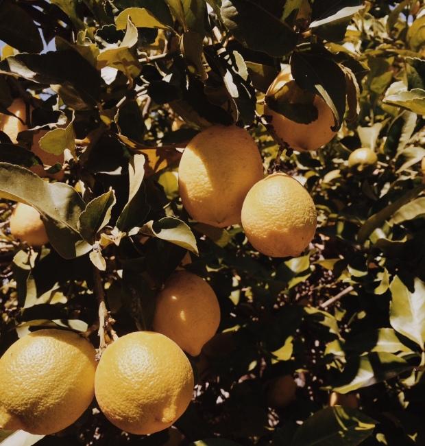 vintage lemons