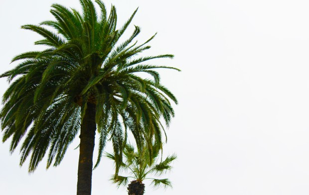 palm tree cloudy day