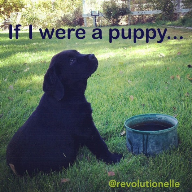 creative writing prompt puppy